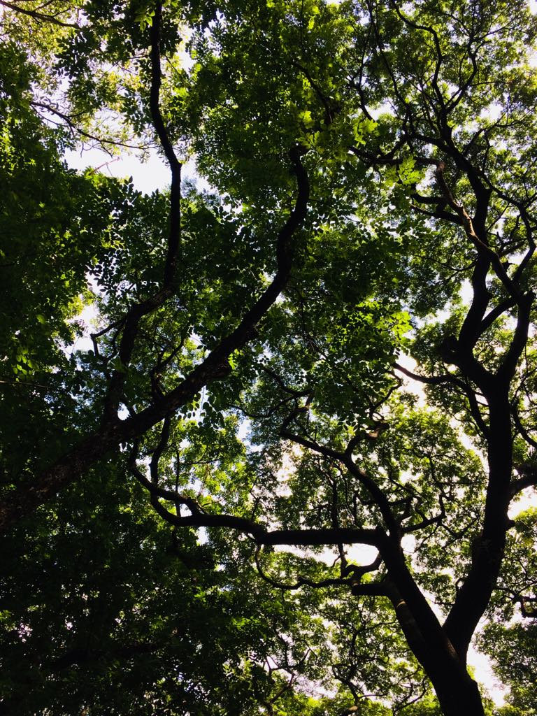 Treedome