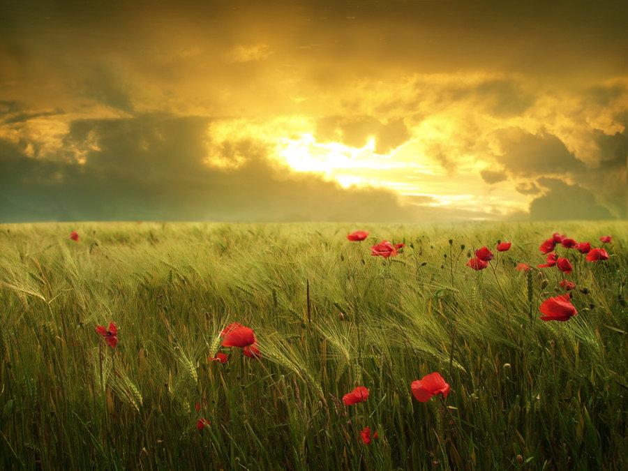 fields_of_hope_by_moroka323-d7z9etp
